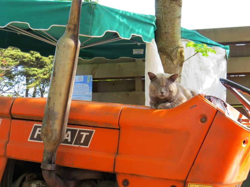 Cat Bréhat