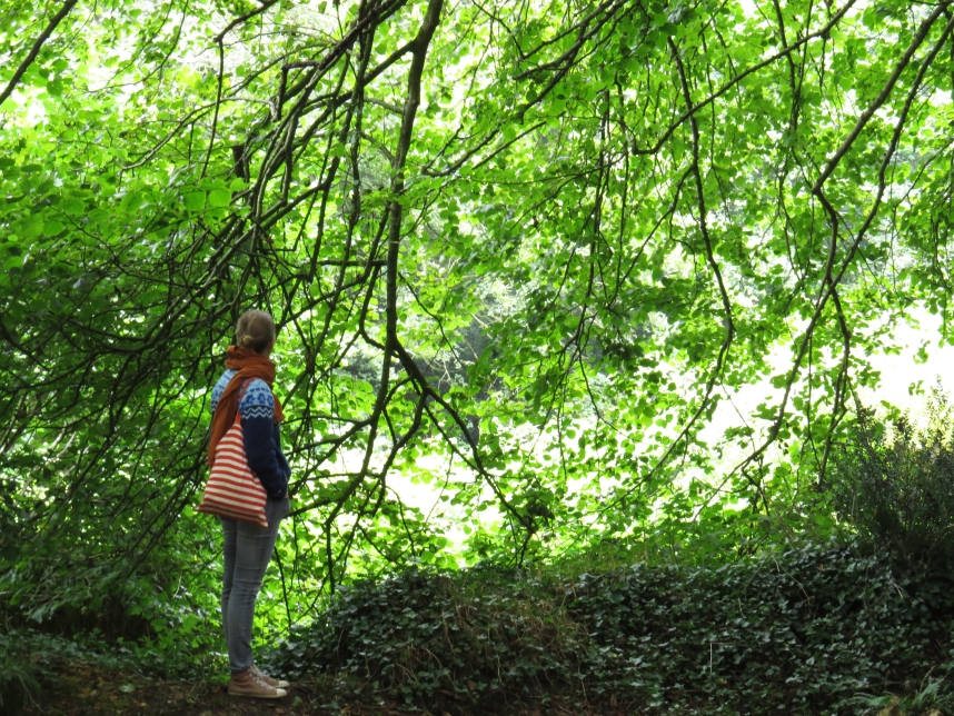 forêt_kergroadez