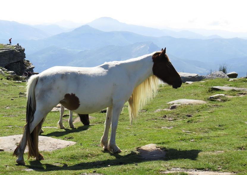 pottok_la_rhune_pays_basque