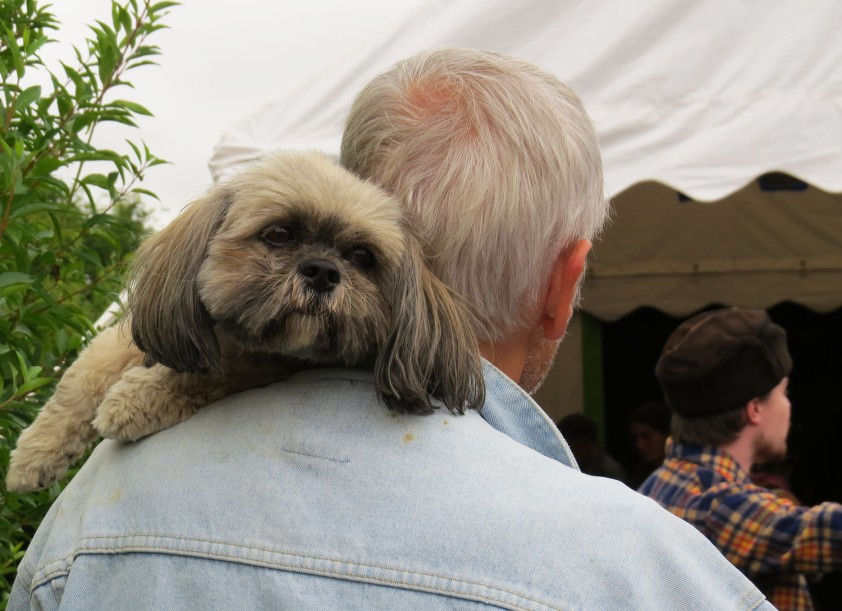 chien_tomahawk_festival