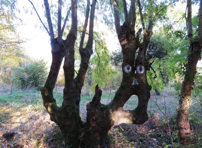 arbre_prairies_saint_martin_rennes
