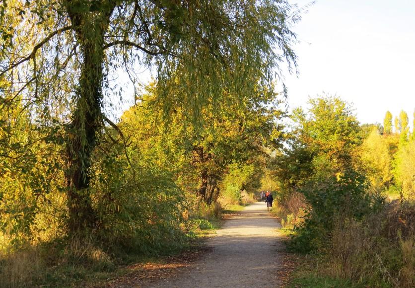 chemin_prairies_saint_martin_rennes