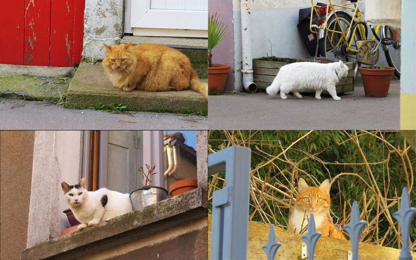 chats_trentemoult_nantes