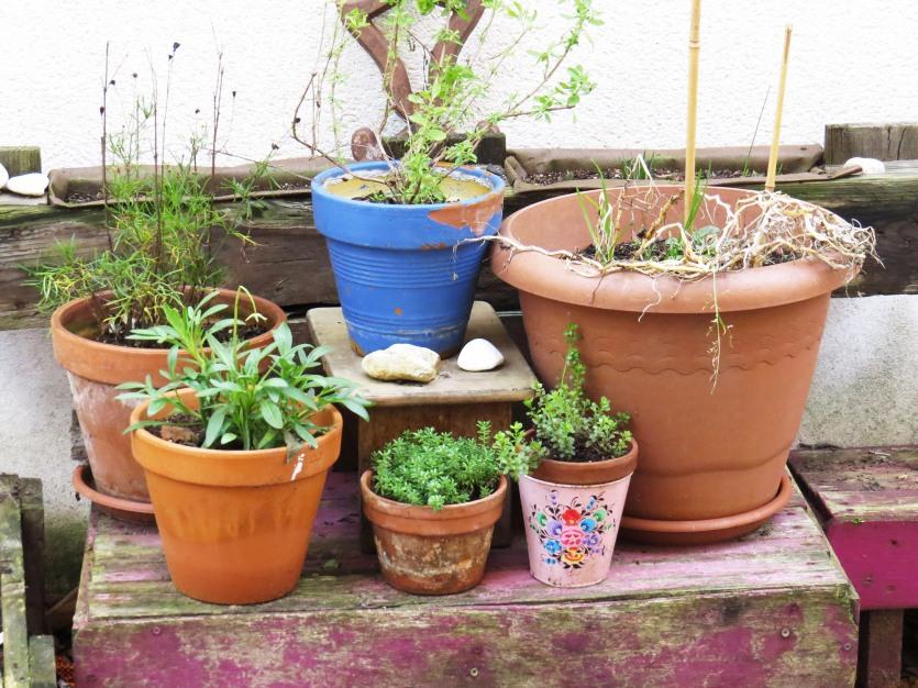 plantes_trentemoult_nantes